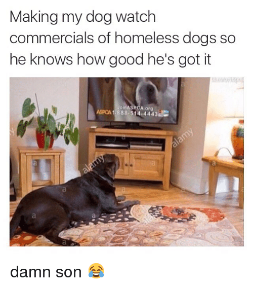 memes: Making my dog watch  commercials of homeless dogs so  he knows how good he's got it  Join A org  ASPCA 1.888.514 4443  C damn son 😂