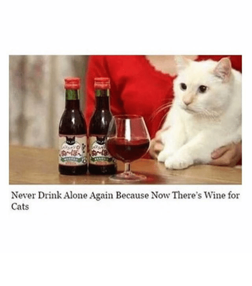 Funny Cat Drinking Meme : Best memes about drinking funny and wine