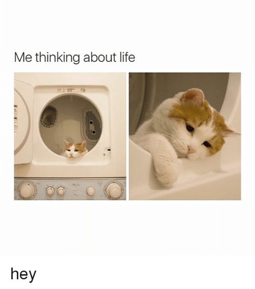Girl Memes: Me thinking about life hey