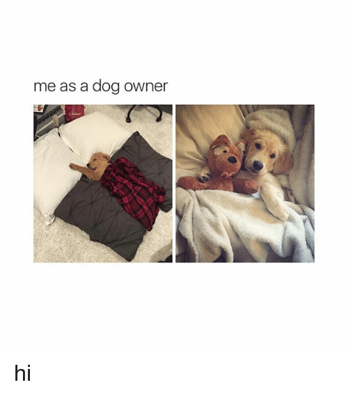 Dogs: me as a dog owner hi