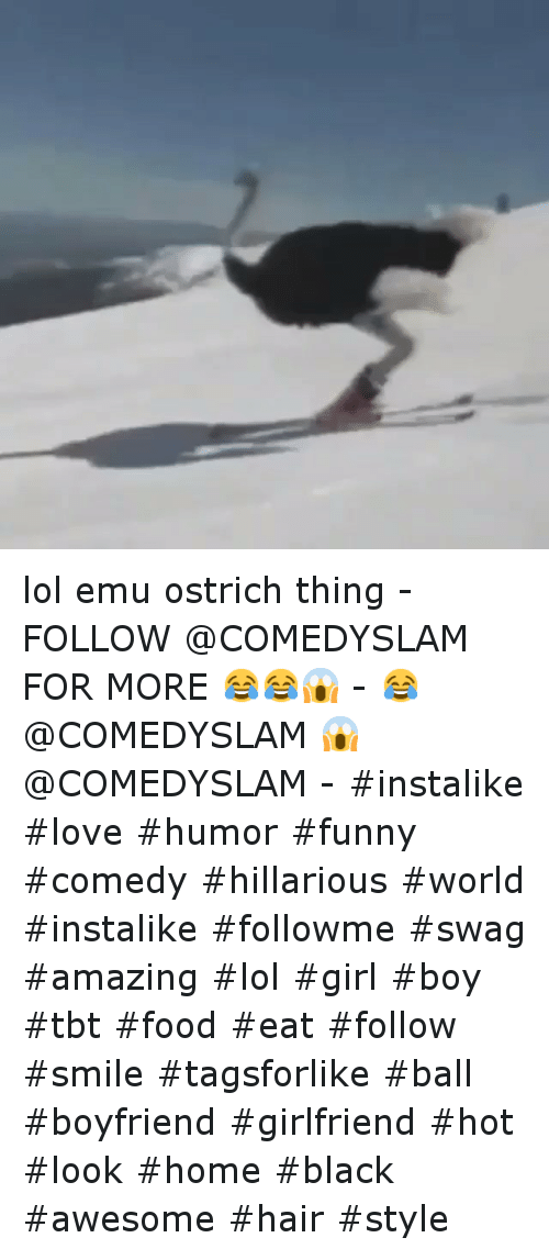 Food, Funny, and Girls: lol emu ostrich thing--FOLLOW @COMEDYSLAM FOR MORE 😂😂😱--😂 @COMEDYSLAM-😱 @COMEDYSLAM--instalike love humor funny comedy  hillarious world instalike followme swag amazing  lol girl boy tbt food  eat follow smile tagsforlike ball -boyfriend girlfriend hot look home black  awesome hair style