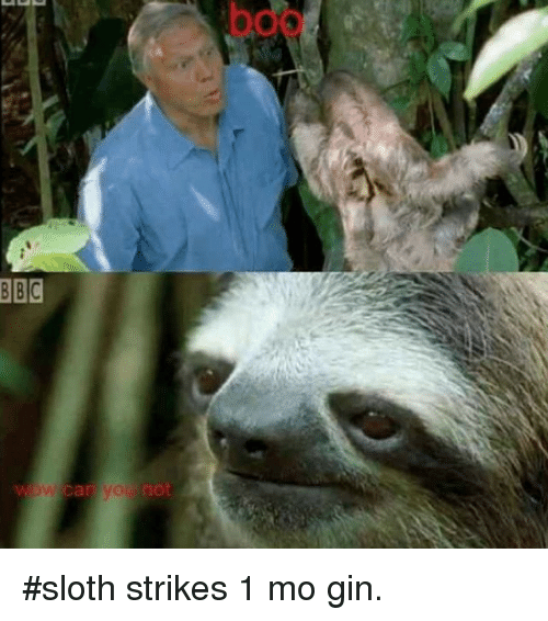 Funny, Sloth, and Bbc: BBC sloth strikes 1 mo gin.