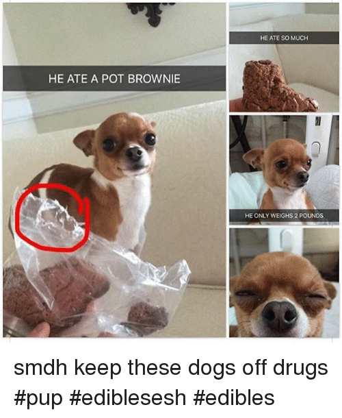 Instagram smdh keep these dogs off drugs 485964 🔥 25 best memes about dank memes, dogs, and pup dank memes,Dank Memes Dog