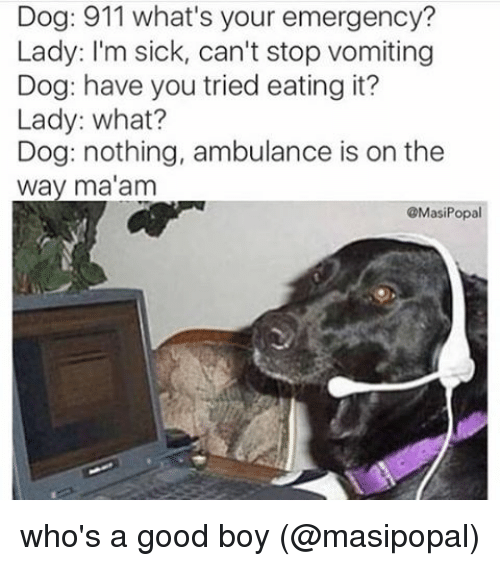 Instagram whos a good boy masipopal 3101a9 dog 911 what's your emergency? lady i'm sick can't stop vomiting