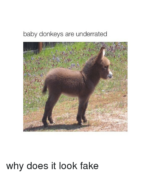 baby donkey: baby donkeys are underrated why does it look fake
