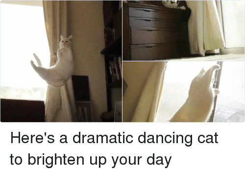 Cats, Dancing, and Ups: L Here's a dramatic dancing cat to brighten up your day