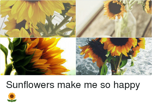 Happy, Girl Memes, and Happiness: Sunflowers make me so happy 🌻