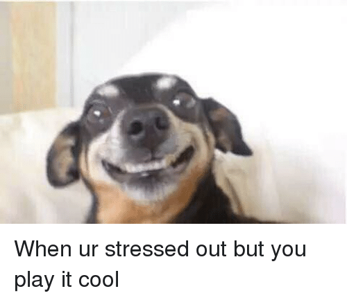 Funny Stressed Out Meme : When ur stressed out but you play it cool funny meme on