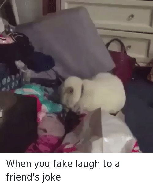 Fake, Friends, and Funny: When you fake laugh to a friend's joke