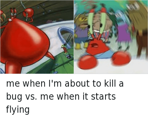 Mr. Krabs, Mrw, and SpongeBob: me when I'm about to kill a bug vs. me when it starts flying
