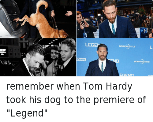 "Dogs, Funny, and Tom Hardy: TAR BUCKS COFF remember when Tom Hardy took his dog to the premiere of ""Legend"""