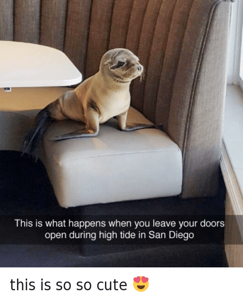 San Diego: This is what happens when you leave your doors  open during high tide in San Diego this is so so cute 😍