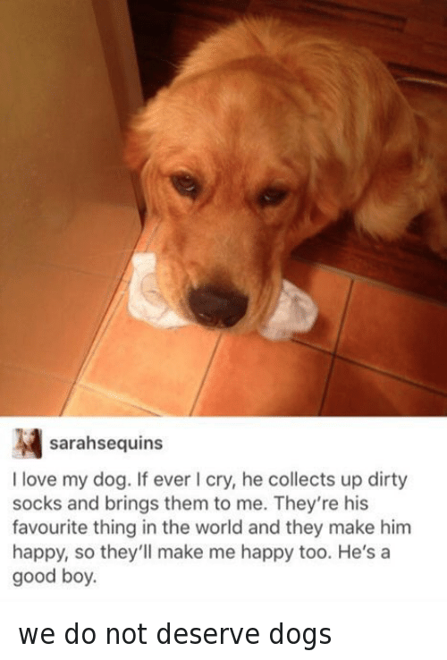 image Dirty dog has his cock sucked before he sends it to eat some pussy