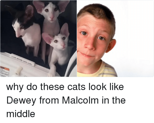 dewey from malcolm in the middle: CLEAN BEFORE EACH LOAD why do these cats look like Dewey from Malcolm in the middle