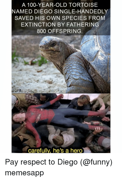 offspring: A 100-YEAR-OLD TORTOISE  NAMED DIEGO SINGLE-HANDEDLY  SAVED HIS OWN SPECIES FROM  EXTINCTION BY FATHERING  800 OFFSPRING  carefully, he's a hero Pay respect to Diego (@funny) memesapp