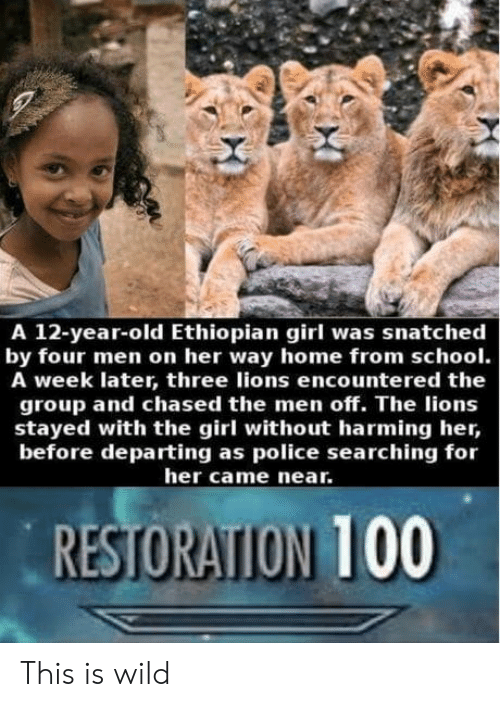 Ethiopian: A 12-year-old Ethiopian girl was snatched  by four men on her way home from school.  A week later, three lions encountered the  group and chased the men off. The lions  stayed with the girl without harming her,  before departing as police searching for  her came near.  RESTORATION 100 This is wild