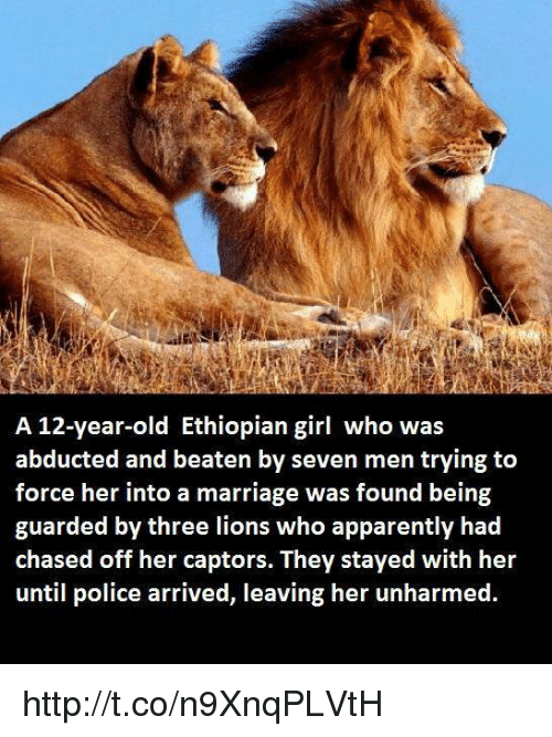 Ethiopians: A 12-year-old Ethiopian girl who was  abducted and beaten by seven men trying to  force her into a marriage was found being  guarded by three lions who apparently had  chased off her captors. They stayed with her  until police arrived, leaving her unharmed http://t.co/n9XnqPLVtH
