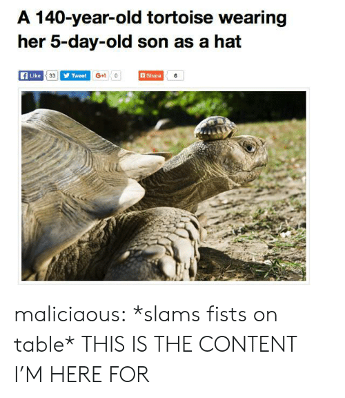 Slams: A 140-year-old tortoise wearing  her 5-day-old son as a hat  Like  Tweet  G+1 0  Share  iu maliciaous:  *slams fists on table* THIS IS THE CONTENT I'M HERE FOR