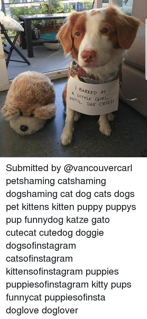 cat dog: A ARKED AT  A LITTLE  SHE CRIED Submitted by @vancouvercarl petshaming catshaming dogshaming cat dog cats dogs pet kittens kitten puppy puppys pup funnydog katze gato cutecat cutedog doggie dogsofinstagram catsofinstagram kittensofinstagram puppies puppiesofinstagram kitty pups funnycat puppiesofinsta doglove doglover