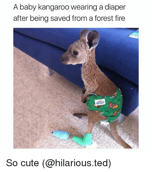 Cute, Fire, and Funny: A baby kangaroo wearing a diaper  after being saved from a forest fire So cute (@hilarious.ted)