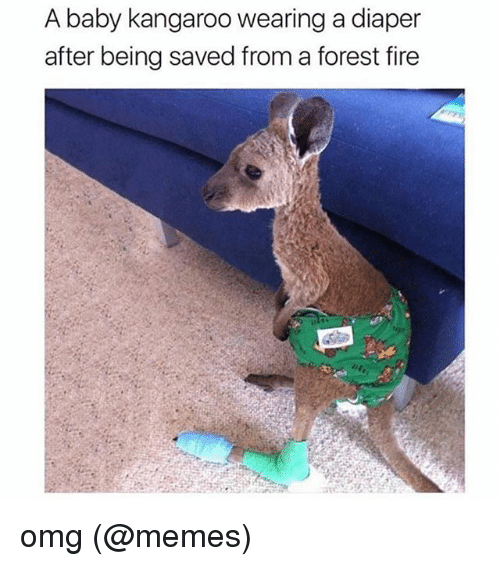 Forest Fire: A baby kangaroo wearing a diaper  after being saved from a forest fire omg (@memes)