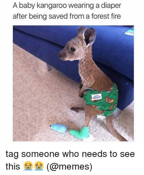 Forest Fire: A baby kangaroo wearing a diaper  after being saved from a forest fire tag someone who needs to see this 😭😭 (@memes)