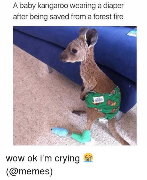 Forest Fire: A baby kangaroo wearing a diaper  after being saved from a forest fire wow ok i'm crying 😭 (@memes)