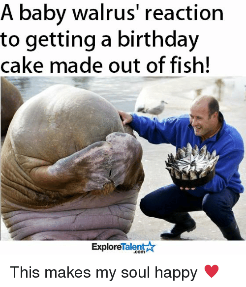 A Baby Walrus' Reaction to Getting a Birthday Cake Made ...