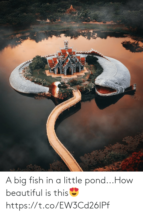 Little: A big fish in a little pond...How beautiful is this😍 https://t.co/EW3Cd26lPf