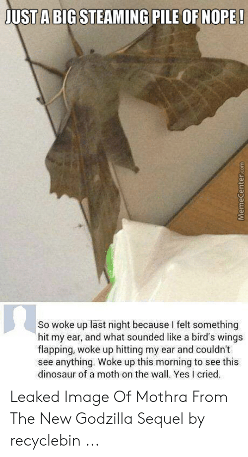 Recyclebin: A BIG STEAMING PILE OF NOPE  JUSTABIGSTEAMING PILE OF NOPE  So woke up last night because I felt something  hit my ear, and what sounded like a bird's wings  flapping, woke up hitting my ear and couldn't  see anything. Woke up this morning to see this  dinosaur of a moth on the wall. Yes I cried Leaked Image Of Mothra From The New Godzilla Sequel by recyclebin ...
