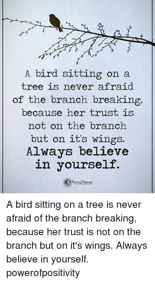 Memes, Birds, and Trees: A bird sitting on a  tree is never afraid  of the branch breaking,  because her trust is  not on the branch  but on its wings.  Always believe  in yourself. A bird sitting on a tree is never afraid of the branch breaking, because her trust is not on the branch but on it's wings. Always believe in yourself. powerofpositivity