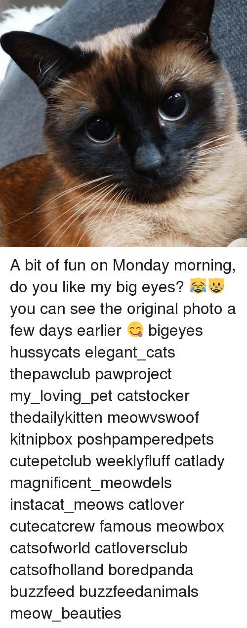 Cats, Memes, and Buzzfeed: A bit of fun on Monday morning, do you like my big eyes? 😹😺 you can see the original photo a few days earlier 😋 bigeyes hussycats elegant_cats thepawclub pawproject my_loving_pet catstocker thedailykitten meowvswoof kitnipbox poshpamperedpets cutepetclub weeklyfluff catlady magnificent_meowdels instacat_meows catlover cutecatcrew famous meowbox catsofworld catloversclub catsofholland boredpanda buzzfeed buzzfeedanimals meow_beauties