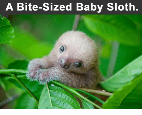 Funny Sloth Memes Of 2017 On Sizzle Slothness