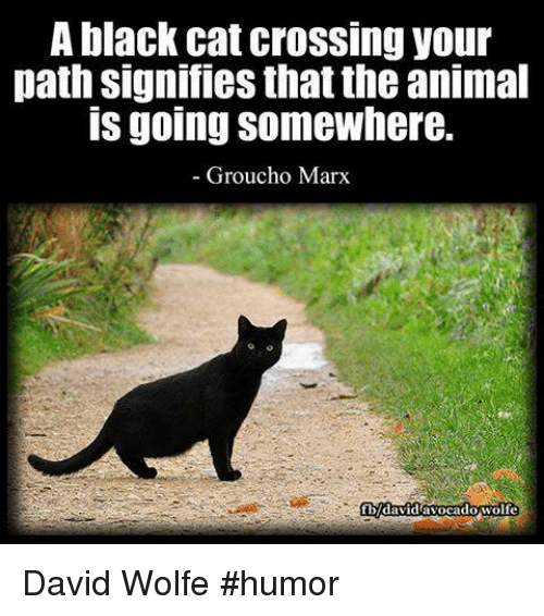 grouchos: A black cat crossing your  path signifies that the animal  IS going Somewhere.  Groucho Marx  cadowolfe  Vidav David Wolfe  #humor
