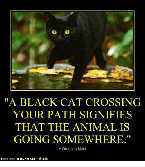 """grouchos: """"A BLACK CAT CROSSING  YOUR PATH SIGNIFIES  THAT THE ANIMAL IS  GOING SOMEWHERE.""""  Groucho Marx"""