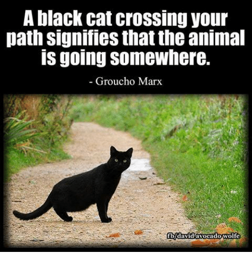 grouchos: A black cat crossing your  path signifies that the animal  IS going Somewhere.  Groucho Marx  cadowolfe  Vidav