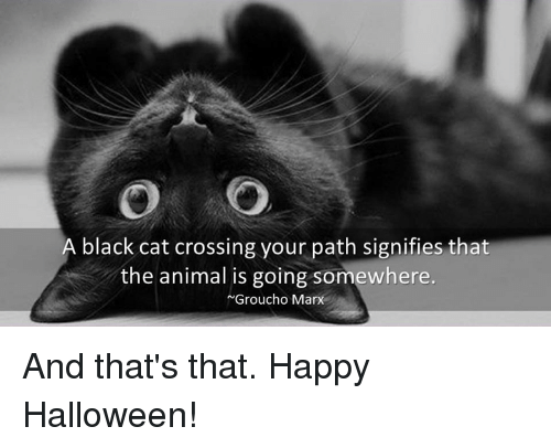 grouchos: A black cat crossing your path signifies that  the animal is going somewhere.  Groucho  Marx And that's that.   Happy Halloween!