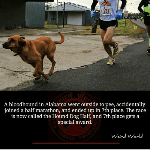 Memes, The Hound, and Alabama: A bloodhound in Alabama went outside to pee, accidentally  joined a half marathon, and ended up in 7th place. The race  is now called the Hound Dog Half, and 7th place gets a  special award.  Weird World