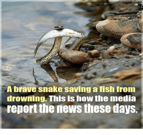 A brave snake saving a fish from drowning this is how the for Saving fish from drowning