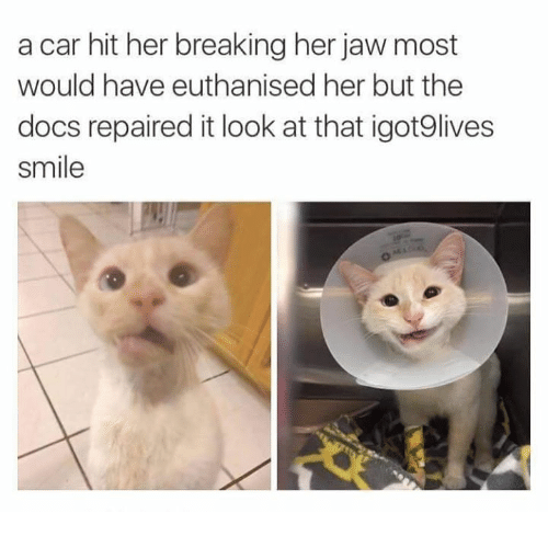 Smile, Her, and Car: a car hit her breaking her jaw most  would have euthanised her but the  docs repaired it look at that igot9lives  smile