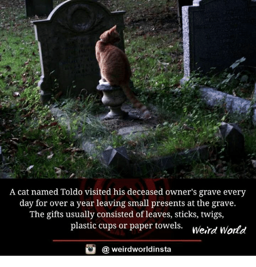 Memes, Weird, and World: A cat named Toldo visited his deceased owner's grave every  day for over a year leaving small presents at the grave.  The gifts usually consisted of leaves, sticks, twigs,  plastic cups or paper towels.  weird World  weirdworldinsta  a