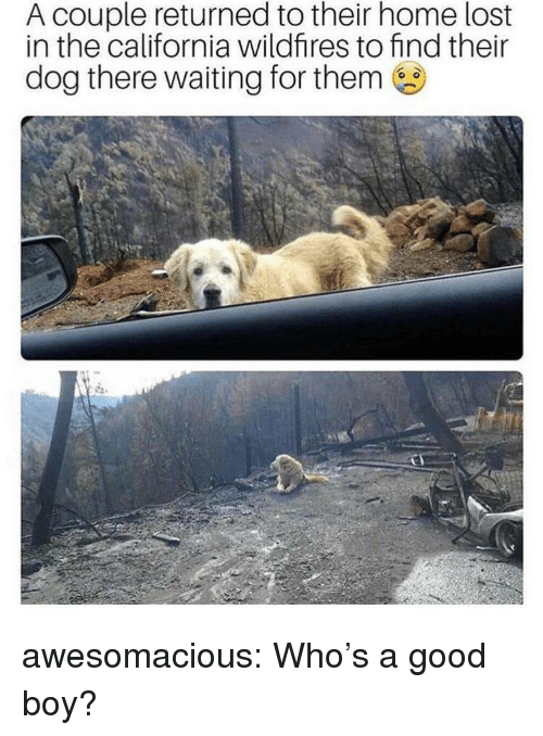 Whos A Good Boy: A couple returned to their home lost  in the california wildfires to find their  dog there waiting for them awesomacious:  Who's a good boy?