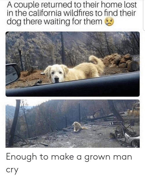Returned: A couple returned to their home lost  in the california wildfires to find their  dog there waiting for them Enough to make a grown man cry
