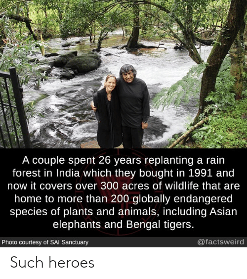 courtesy: A couple spent 26 years replanting a rain  forest in India which they bought in 1991 and  now it covers over 300 acres of wildlife that are  home to more than 200 globally endangered  species of plants and animals, including Asian  elephants and Bengal tigers.  @factsweird  Photo courtesy of SAI Sanctuary Such heroes