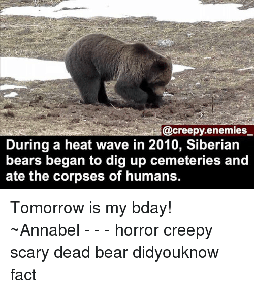 Creepy, Memes, and Bear: A@creepy.enemies  During a heat wave in 2010, Siberian  bears began to dig up cemeteries and  ate the corpses of humans. Tomorrow is my bday! ~Annabel - - - horror creepy scary dead bear didyouknow fact