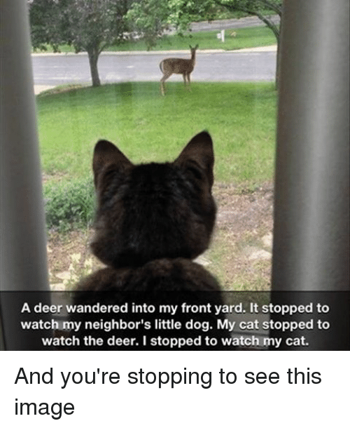 Deer, Memes, and 🤖: A deer wandered into my front yard. It stopped to  watch my neighbor's little dog. My cat stopped to  watch the deer. I stopped to watch my cat. And you're stopping to see this image