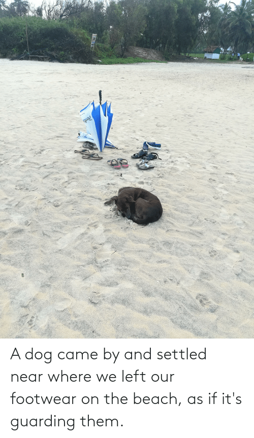 the beach: A dog came by and settled near where we left our footwear on the beach, as if it's guarding them.