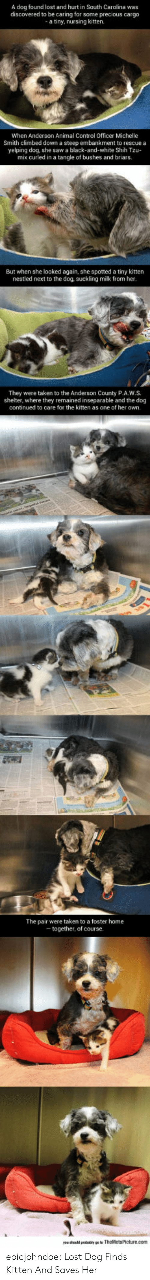 michelle: A dog found lost and hurt in South Carolina was  discovered to be caring for some precious cargo  a tiny, nursing kitten.  When Anderson Animal Control Officer Michelle  Smith climbed down a steep embankment to rescue a  yelping dog, she saw a black-and-white Shih Tzu-  mix curled in a tangle of bushes and briars.  But when she looked again, she spotted a tiny kitten  nestled next to the dog, suckling milk from her  They were taken to the Anderson County P.A.W.S.  shelter, where they remained inseparable and the dog  continued to care for the kitten as one of her own.  The pair were taken to a foster home  together, of course epicjohndoe:  Lost Dog Finds Kitten And Saves Her