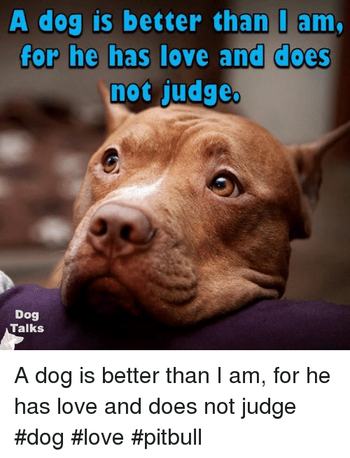 Memes, Pitbull, and 🤖: A dog is better than I am.  for he has love and does  not judge.  Dog  Talks A dog is better than I am, for he has love and does not judge  #dog #love #pitbull