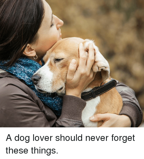 dog lovers: A dog lover should never forget these things.